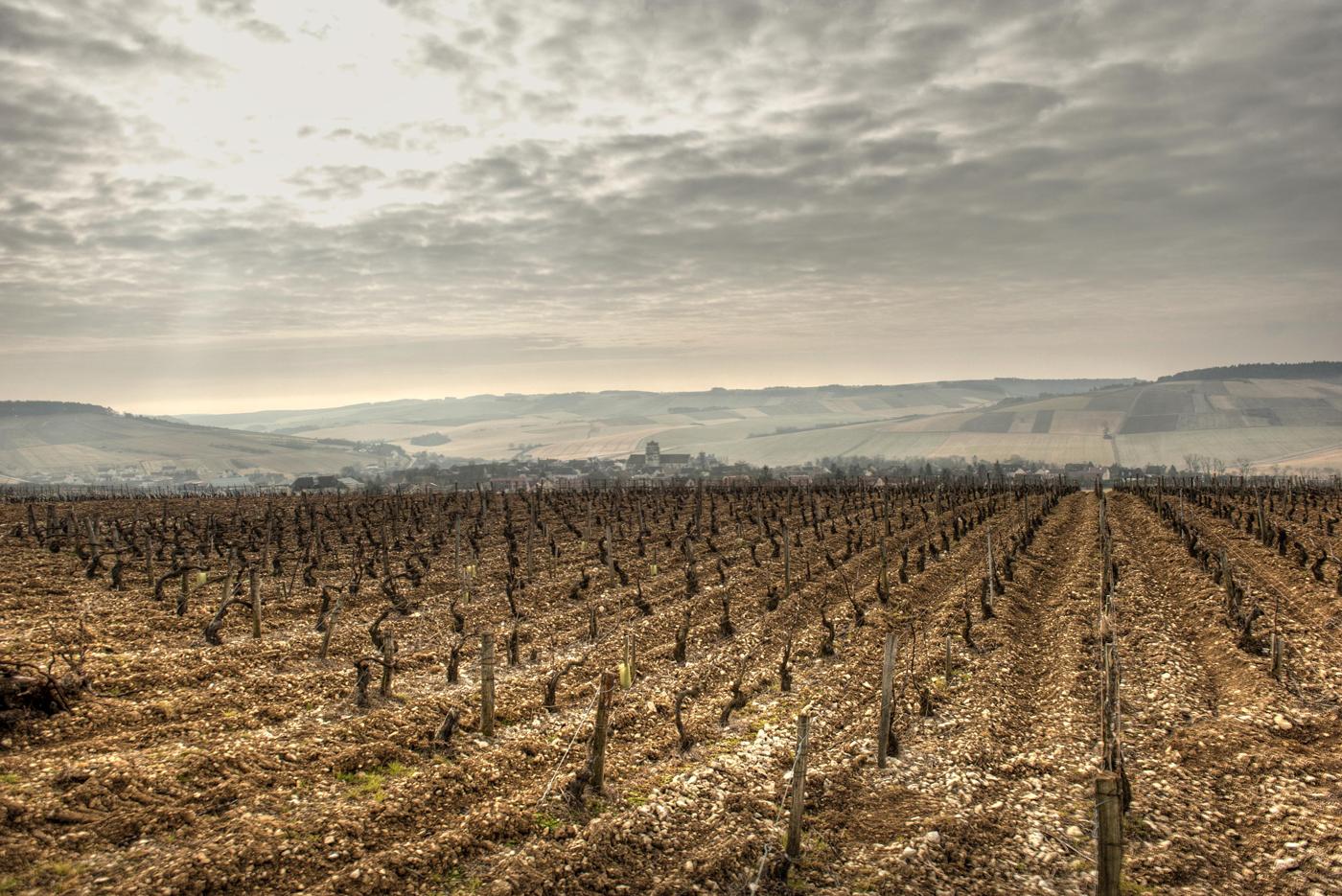 St Bris le vineux